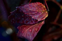 Leaves and rain ... Stock Photos