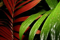 Leaves in rainforest. Green and red leaves in tropics, Oriente, Ecuador Stock Photos