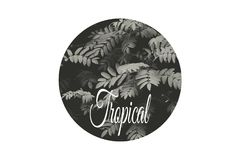 Leaves in the rainforest. Tropics tropical climate bloom season summer black white style minimal nature wallpaper background seasonal concept background badge Royalty Free Stock Photography