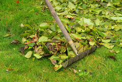 Leaves rake Stock Image