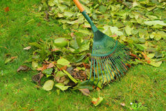 Leaves rake. Gardening in fall Royalty Free Stock Photos
