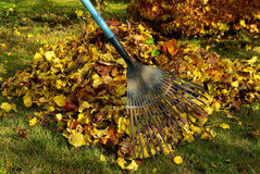 Leaves rake Stock Photo