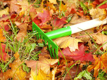 Leaves with rakes Stock Images