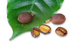 Leaves with raw coffee beans Royalty Free Stock Photography