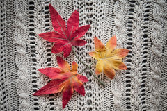 Leaves red autumn on a grey knitted background. Red leaves knitting  textile botany Royalty Free Stock Photography