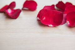 Leaves Red rose flower on wooden background . Leaves Red rose flower on wooden background Stock Photo