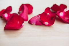 Leaves Red rose flower on wooden background . Leaves Red rose flower on wooden background Royalty Free Stock Images