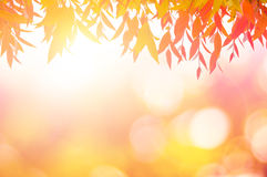 Leaves red In spring or Beautiful in blurred nature over sunset Stock Photography