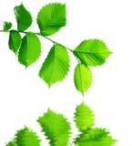Leaves Reflecting stock image