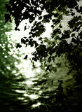 Leaves reflecting on water Royalty Free Stock Image