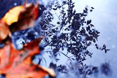 Leaves and Reflection royalty free stock image