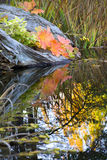 Leaves Reflections Fall Colors Van Dusen Gardens Stock Photos