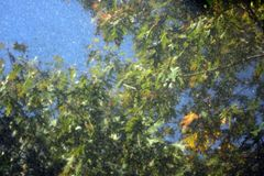 Leaves reflects on black granite. Plants, reflections royalty free stock photo