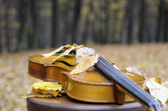 Leaves resting on violin. Musical instrument isolated in fall season Stock Images