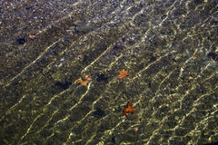Leaves with ripples floating in clear water Stock Photography