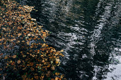 Leaves on a river. A mantle of fallen leaves covering the surface of a river royalty free stock photography