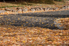 Leaves on the road Royalty Free Stock Photos