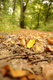Leaves on road. In forest Stock Photo