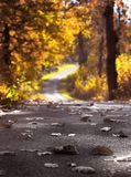 Leaves on road. Road, leaves anf fall Royalty Free Stock Images
