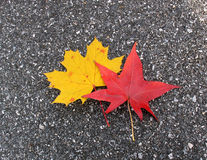 Leaves on a road royalty free stock images