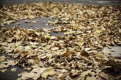 Leaves on the road Royalty Free Stock Image