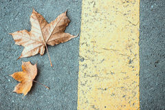 Leaves and Road. Autumn background leaf on a road Stock Photography