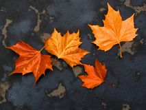 Leaves on the road Royalty Free Stock Photography