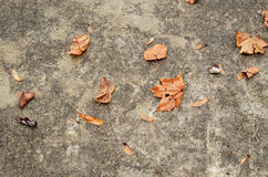 Leaves on the road Royalty Free Stock Photo