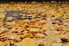 Leaves on the road. Yellow autumn leaves on a road in the woods stock image