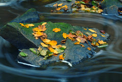 Leaves on rock in stream Royalty Free Stock Photos