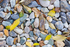 leaves on the rocks Royalty Free Stock Images