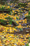 Leaves and rocks in the stream Stock Photo