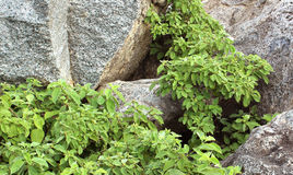 Leaves on the Rocks Stock Image
