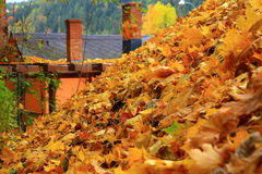 The leaves on the roof Stock Photography