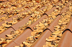 Leaves on the roof Royalty Free Stock Photos
