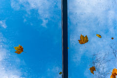 Leaves on a roof windown in Autumn  Stock Image