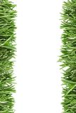 The leaves of rosemary on the edge Stock Photography