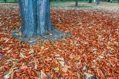 Leaves runt om treen Fotografering för Bildbyråer