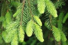 leaves sörjer royaltyfria foton