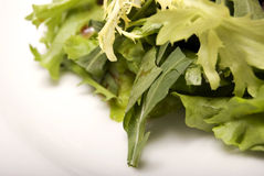 Leaves of salad. Salad leaves on a white background stock photo