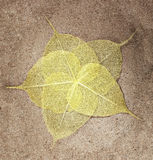 Leaves on the sand royalty free stock image