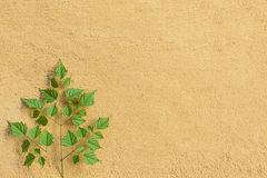 Leaves and sand Stock Photo