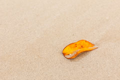 Leaves on the sand Royalty Free Stock Photo