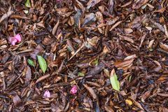 Leaves fallen on the ground. Changing of season. Leaves scattered on the ground during the changing of the seasons Royalty Free Stock Photos