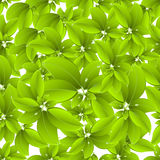 Leaves seamless pattern Royalty Free Stock Image