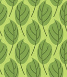 Leaves seamless pattern. Vector background of green plants.  Royalty Free Stock Photography