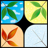 Leaves through the seasons Royalty Free Stock Photography