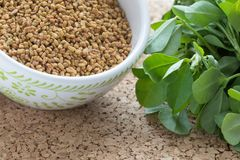 Leaves and Seeds of the Fenugreek Plant Stock Image
