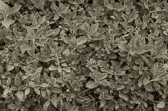 Leaves sepia background Royalty Free Stock Photo