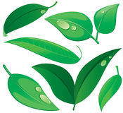 Leaves set. Set of leaves . Vector illustration Royalty Free Stock Photo